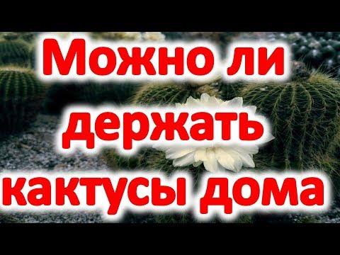 Можно ли держать кактусы дома? Приметы о кактусах @Эзотерика для Тебя: Гороскопы. Ритуалы. Советы.