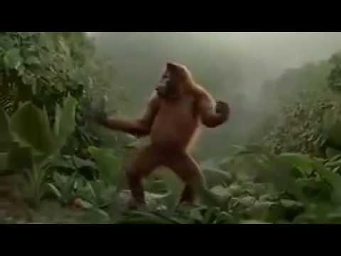 Affen Tanz