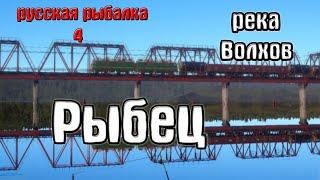 Русская рыбалка 4 рр4 rf4 река Волхов Рыбец