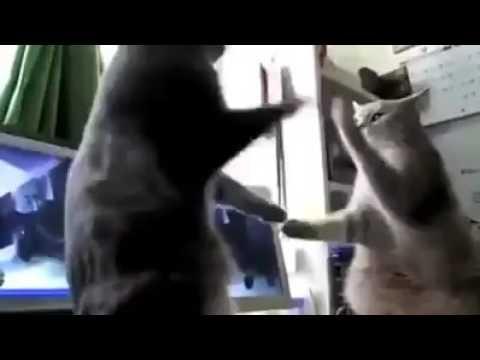 Lustiges Katzen Video Backe Backe Kuche Youtube