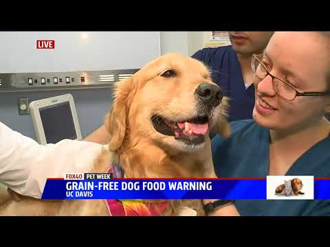 A Warning To Pet Owners About Grain Free Dog Food
