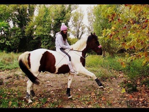 tuto n 1 apprendre la jambette a son cheval youtube. Black Bedroom Furniture Sets. Home Design Ideas