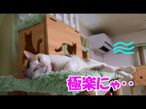 猫部屋に設置したクーラーを初めて稼動させた結果、極楽空間に!? Neko-Cat loves the airconditioner