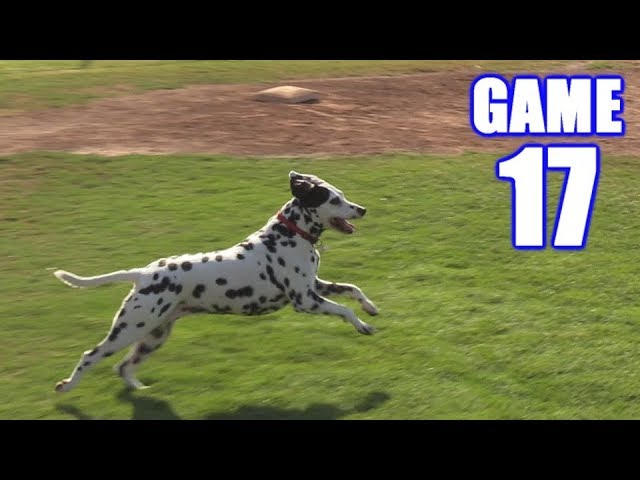 spotted-wolf-plays-on-the-infield-on-season-softball-series-game-17