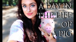 Mini Piglet Daily Care Routine