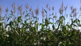 Shale Gas Development Near a  Farm in Lawrence County, Pennsylvania