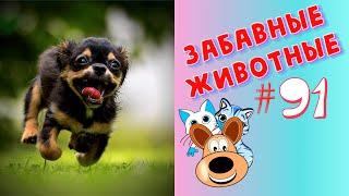 Приколы с Животными #91 / Смешные Животные 2020 / Приколы / Приколы про Животных / Лучшие Приколы