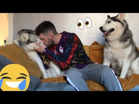 Jealous Husky Gets Super Angry When I Ignore Her!! [FUNNIEST REACTION EVER]