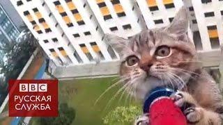 Спасение кошки, выпавшей из окна многоэтажного здания