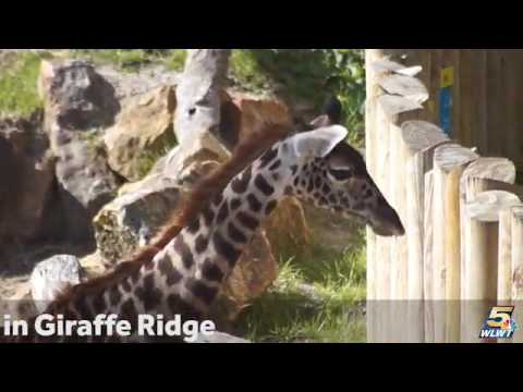3 minutes of Cincinnati Zoo Babies