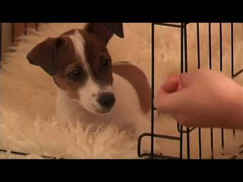 crate-training:-puppy-training-made-easy.-how-to-crate-train-your-puppy