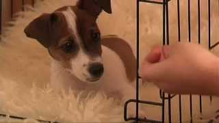 Crate Training: Puppy Training Made Easy. How To Crate Train Your Puppy