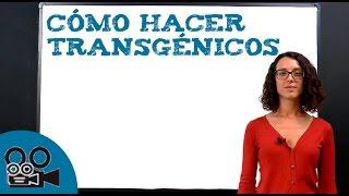Microorganismos transgénicos: cómo hacer transgénicos