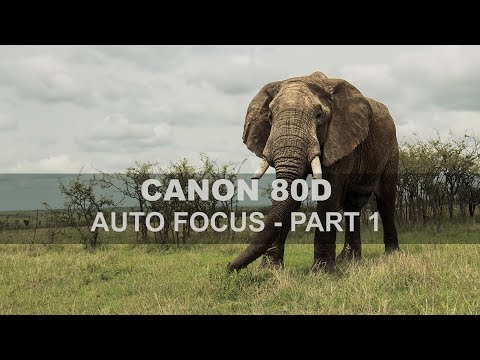 Canon 80D - Auto Focus - Part 1