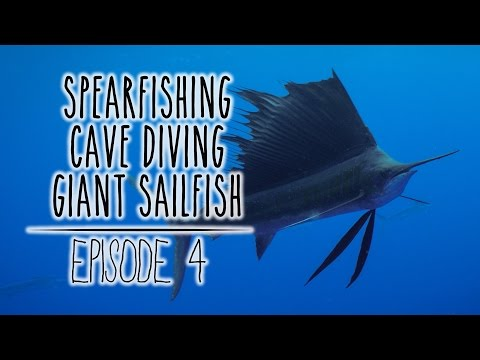 Diving in Tonga: Spearfishing & Freediving with Sailfish (Underwater Ally Adventures) Ep.4