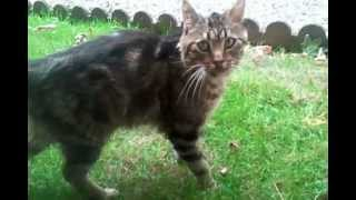 Lucien dans le jardin