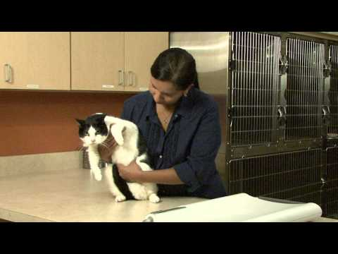 Preventing obesity in pets