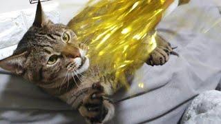 고양이랑 장난감으로 놀아주기