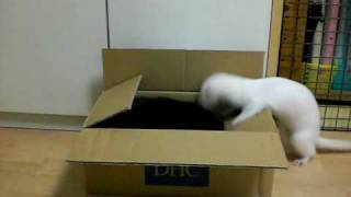 最後にミロの猫パンチが炸裂してます!