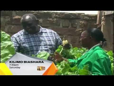Kilimo Biasahra  Kutumia Magunia Kukuza Mboga Kibiashara