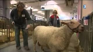 Portrait d'une éleveuse d'ovins en Creuse