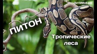Питон. Энциклопедия для детей про животных. Тропики