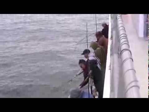 16hr Seabass Offshore 12/27