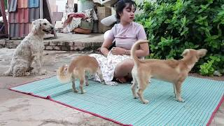 omg smart dog playing with cute girl at home how to play with puppy cute groups funny videos