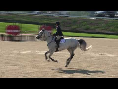 Video Of OUT OF THE BLUE SCF Ridden By JENNIFER WAXMAN From ShowNet!