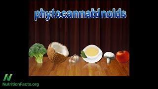 Marihuanové receptory a jídlo