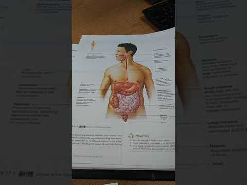 Digestive System - Alimentary Canal