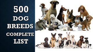 500 TYPES OF DOGSALL DOG BREEDS  COMPLETE LIST