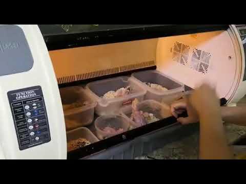 Питомник города Краснодара продаёт птенцов крупных видов попугаев