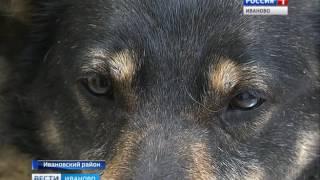 В Иванове разгорелась настоящая война зоозащитников с организацией по отлову собак СЮЖЕТ ОТ 27.04.17