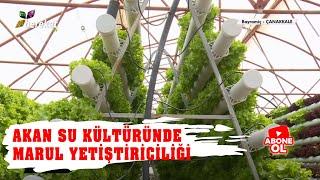 Tarım Sözlüğü - Akan Su Kültüründe Marul Yetiştiriciliği