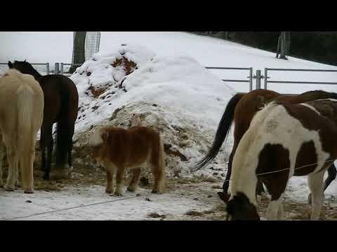 CRYPTO VALLEY CENTRE : Les moutons et chevaux du Sennweid !