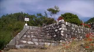 松川町「嶺岳寺」では秋のお彼岸に合わせて、ヒガンバナが見頃を迎えま...