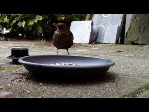 Vogels in mijn Tuin / Birds in my Garden