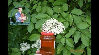 Искусственный мед или как сварить мед из цветков бузины