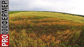 """Последействие """"евролайтинга"""" на озимой пшенице. (Евроленд и Виталайт).Технология выжженное поле."""
