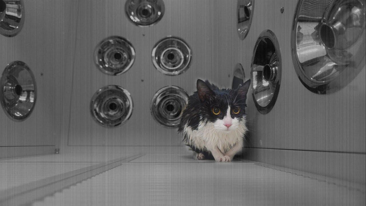 고양이가 갇혀서 떨고있었어요