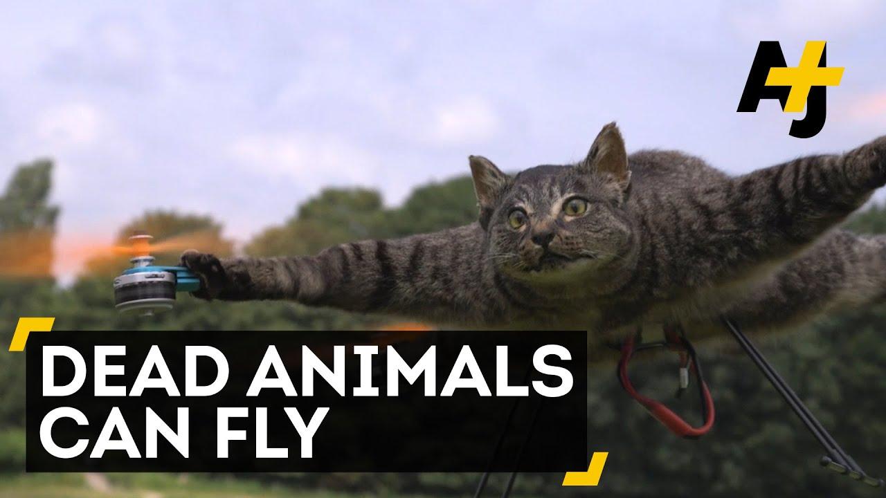 Animal Dead Cat Drone