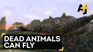 Guy Turns Beloved Dead Pet Into A Cat Drone As A Kind Of Tribute And Makes Other Animal Drones