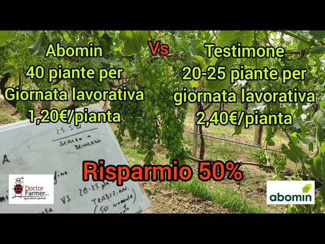 Vittoria - Analisi riduzione costi acinino con Abomin rispetto al testimone - Az. Scalzo e Belluardo