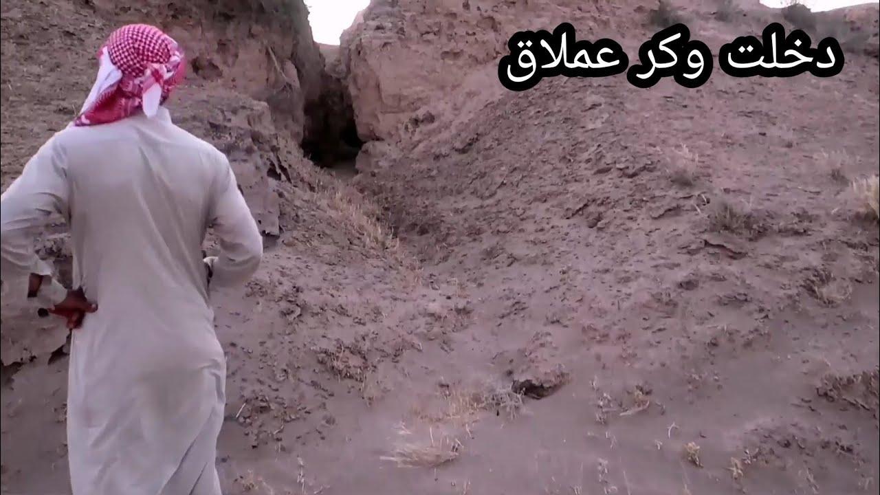 كيف تعيش الحيوانات في الصحراء القاحله عجيب / جواد المغامر