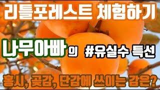 리틀포레스트 - 곶감만들기 / 나만의 시골생활 / 곶감…