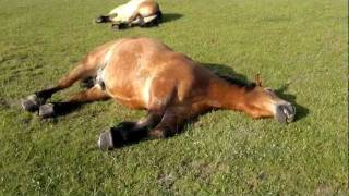 The Cutetest Loud Snoring Horses ever :-)