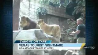 2010 09 08.Lion attacks trainer,Las Vegas MGM Grand.