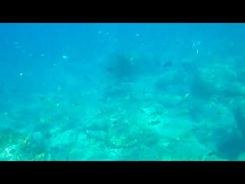 Reef Pigeon Beach Antigua Jan 2019 many small fish up in water column