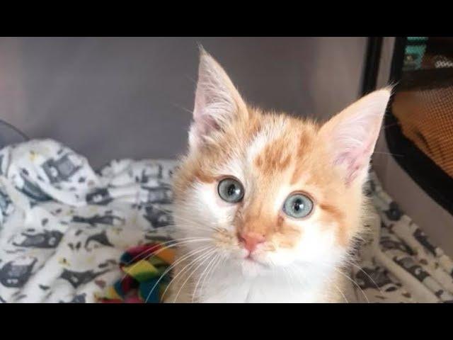 sick-kitten-dropped-off-in-a-box